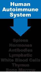 immune system list